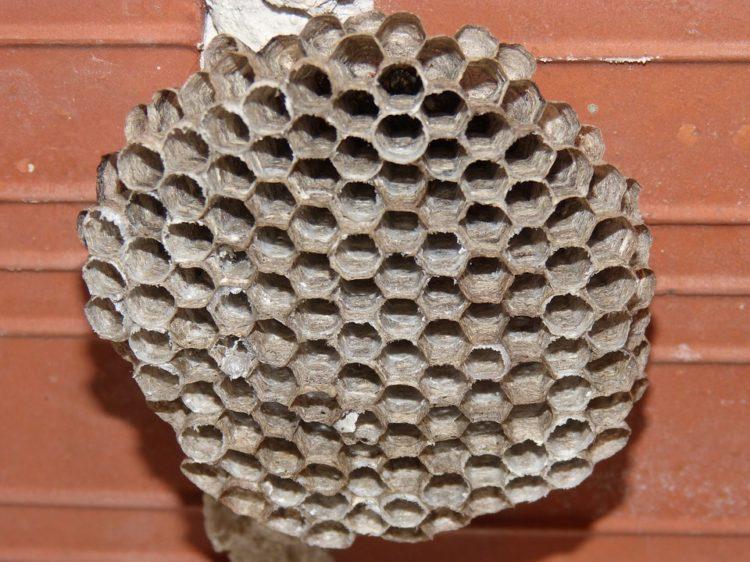 verwijder n oude wespennesten