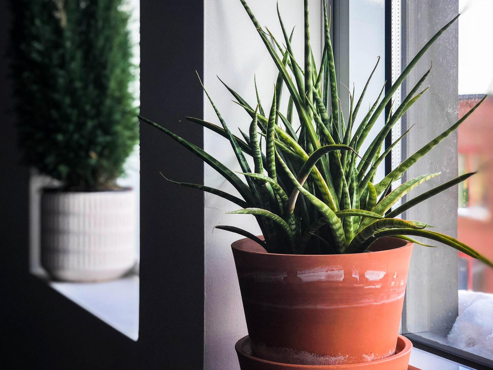 3 tips om eenvoudig een geschikte bloempot te vinden